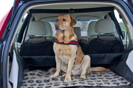 mietwagen mit hund sixt autovermietung. Black Bedroom Furniture Sets. Home Design Ideas