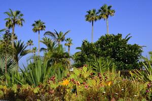 Vegetation bei Puerto de la Cruz - Teneriffa